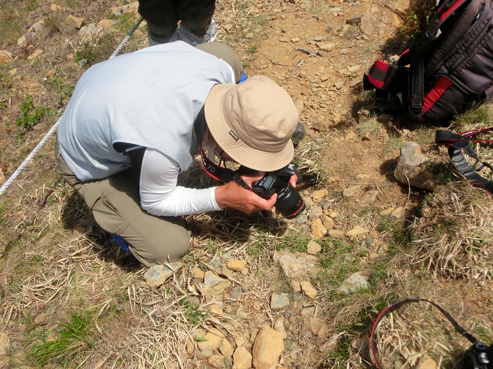 ヒメチャマダラセセリ 卵発見 雌雄比較、類似種比較 2014.5.25北海道02_a0146869_5413936.jpg