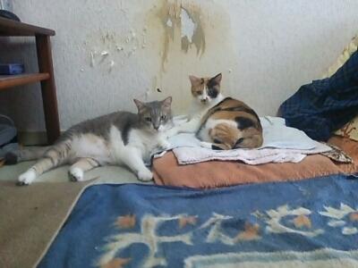 ルナとレイン_b0112380_1245964.jpg