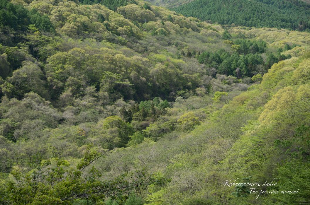 新緑の八ヶ岳_c0137403_18394077.jpg