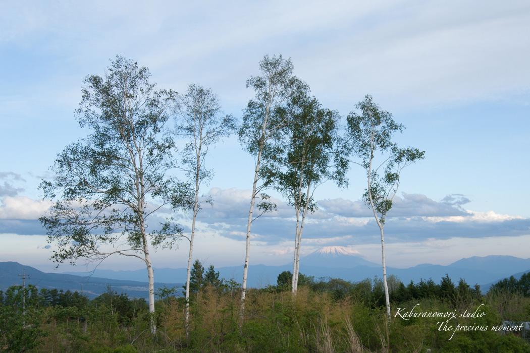 新緑の八ヶ岳_c0137403_18431694.jpg