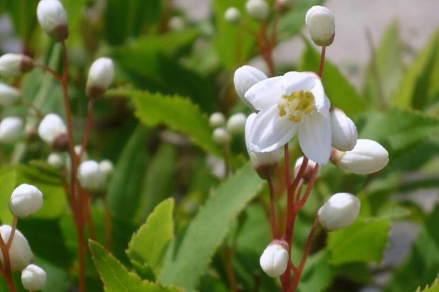 続園芸系 ・・・ やっとバラが咲き始めました_a0214206_2227486.jpg