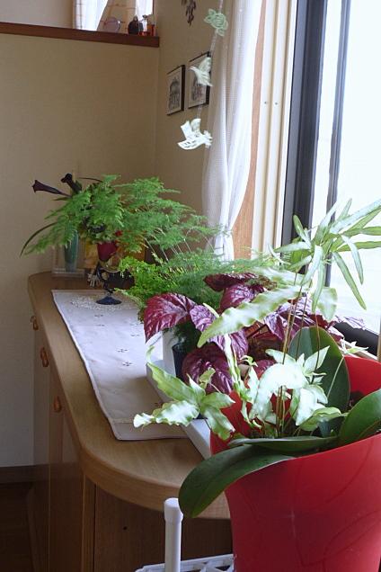 続園芸系 ・・・ やっとバラが咲き始めました_a0214206_22433924.jpg