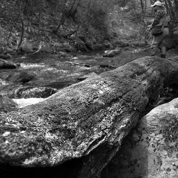Finshing in the Woods_d0127209_19215257.jpg