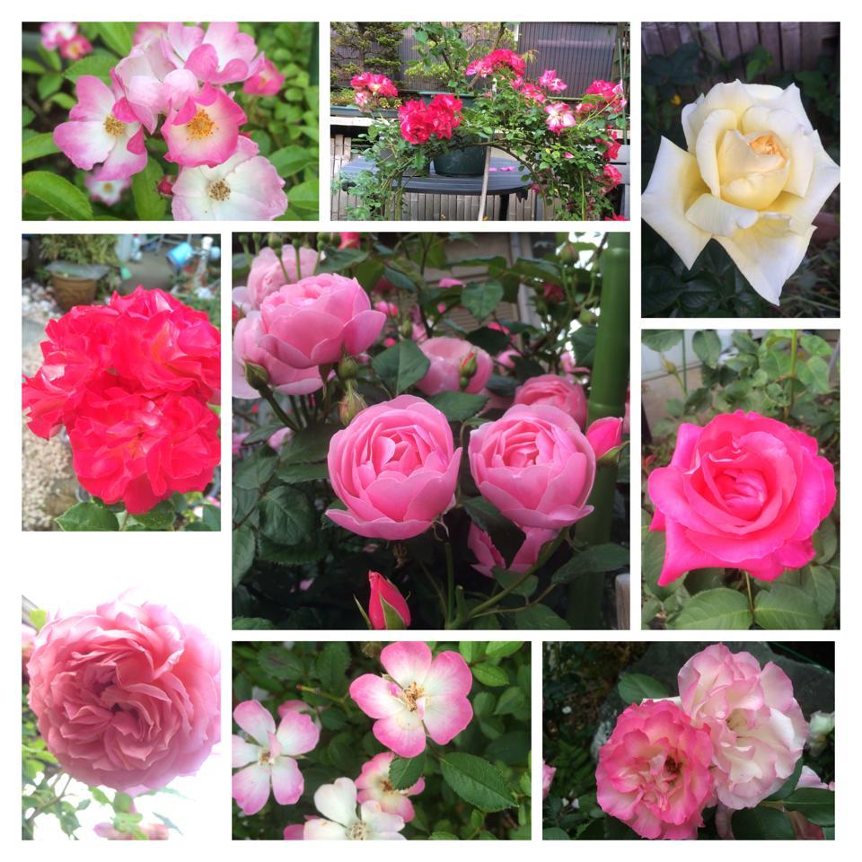 ☆薔薇〜☆_d0265309_2075376.jpg