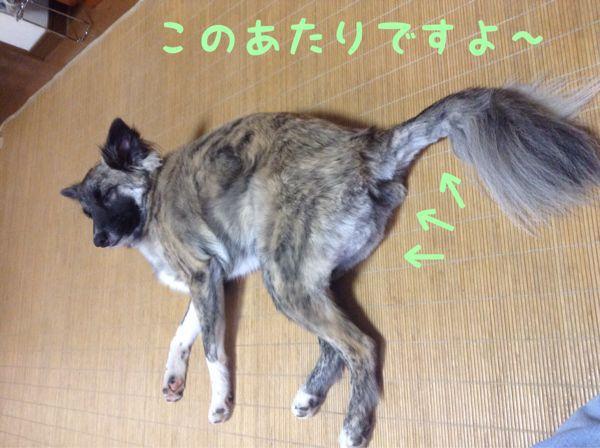 f0329311_11262789.jpg