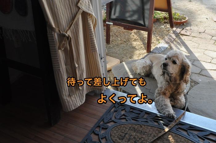 b0067012_2565973.jpg