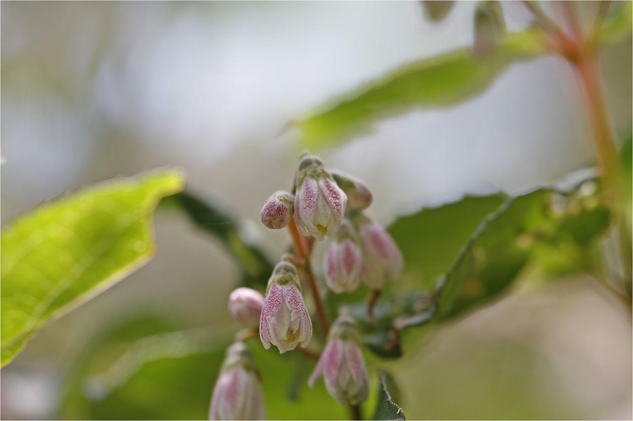今日のお花と・・・セセリちゃんです。^^_c0188951_17483980.jpg