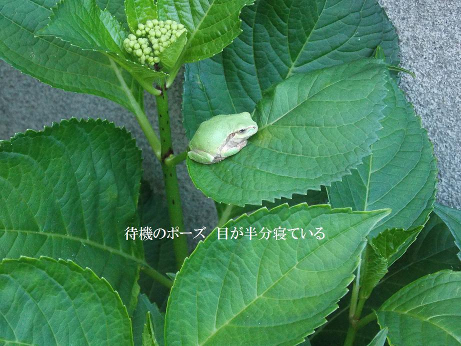 b0193252_213971.jpg