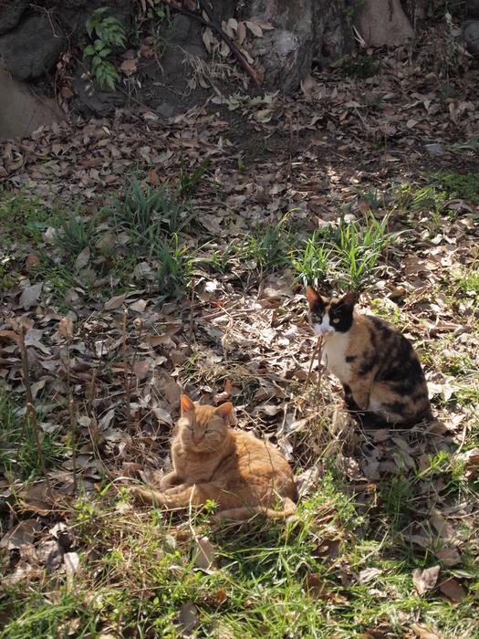 ちょっとシャイな猫ちゃんたち。。。_d0152261_21522616.jpg