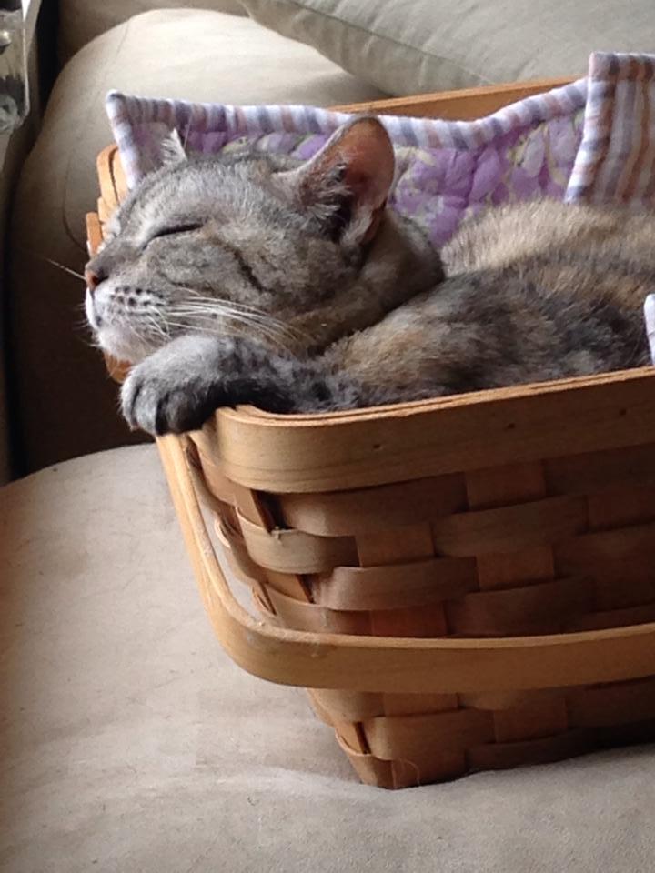 cat with a wind_b0195783_14312534.jpg