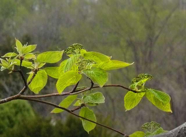 松の木に新芽_d0162994_9261090.jpg