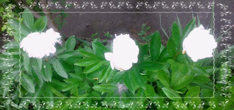 d0306603_175067.jpg
