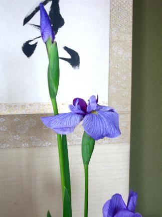りりしく、端正な、虹の美神の花☆_c0098807_21492275.jpg
