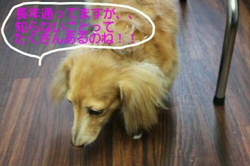 b0130018_014120.jpg