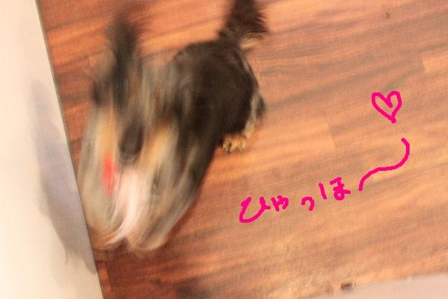 b0130018_22323367.jpg