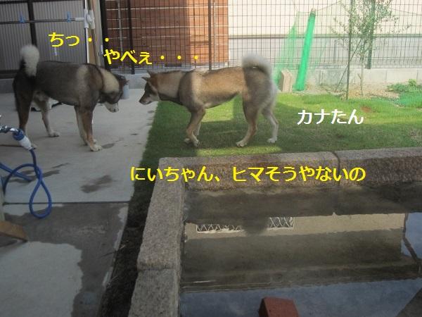 f0143123_20341245.jpg