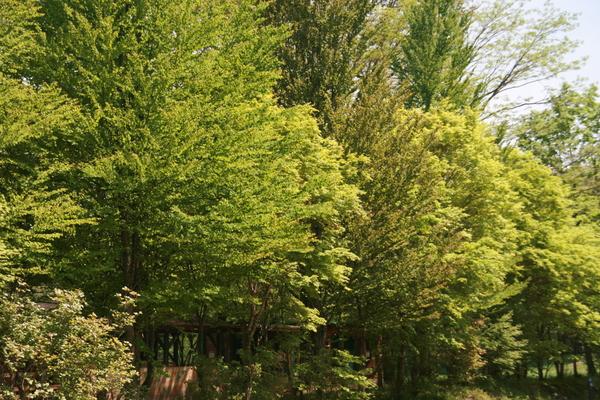 新緑に包まれて_b0174425_13233950.jpg