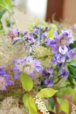 6月の花 パプシチア_d0086634_13543307.jpg