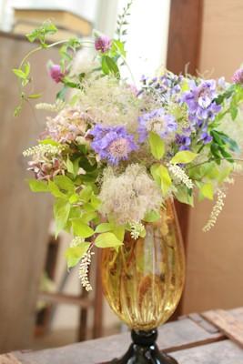 6月の花 パプシチア_d0086634_13544465.jpg