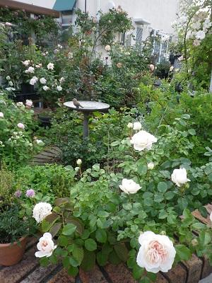 お知らせと我が家の庭パート1_e0086738_18221154.jpg