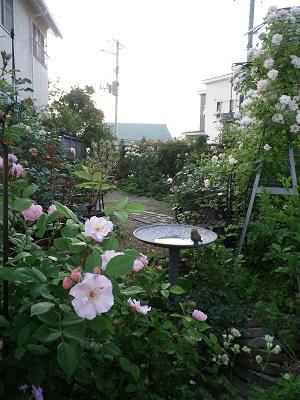 お知らせと我が家の庭パート1_e0086738_18222958.jpg