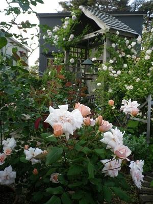 お知らせと我が家の庭パート1_e0086738_18225185.jpg