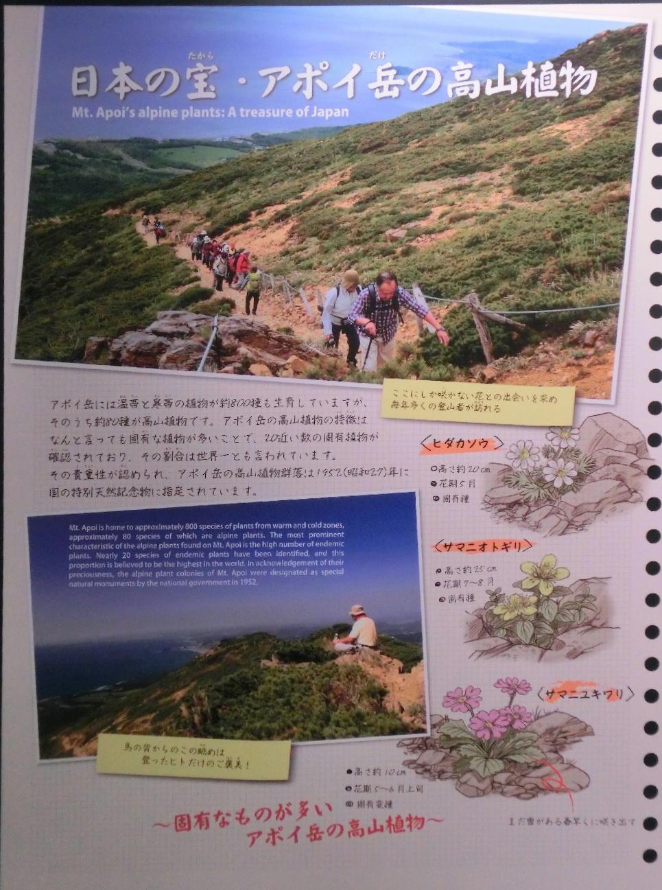 シノリガモ  アポイ岳の高山植物に逢う前に。 2014.5.25北海道04_a0146869_22143134.jpg