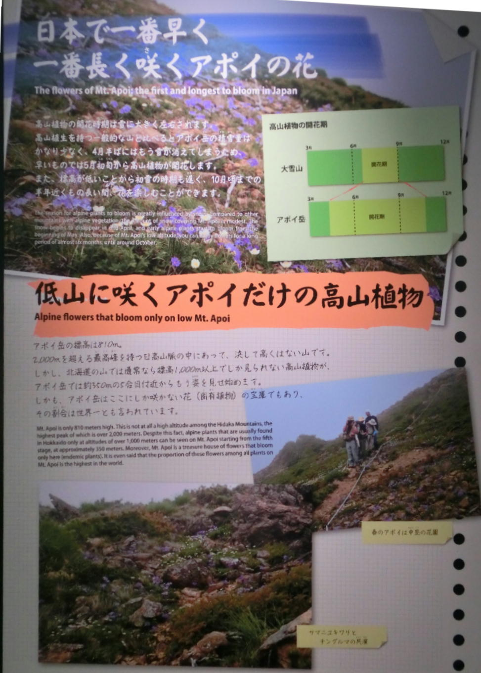 シノリガモ  アポイ岳の高山植物に逢う前に。 2014.5.25北海道04_a0146869_2214405.jpg