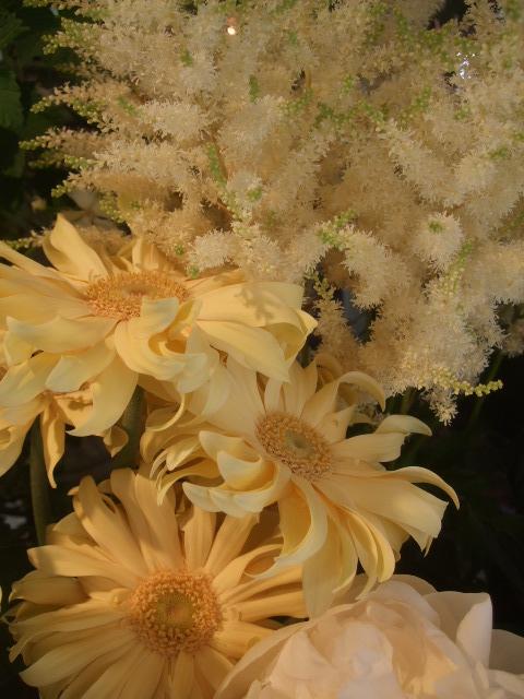 オークリーフ(実物と草花)_f0049672_1623447.jpg