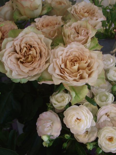 オークリーフ(実物と草花)_f0049672_1625933.jpg