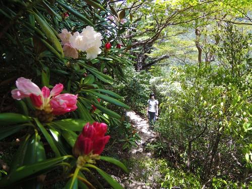 ひさしぶりの森、石楠花。_b0240382_13594123.jpg