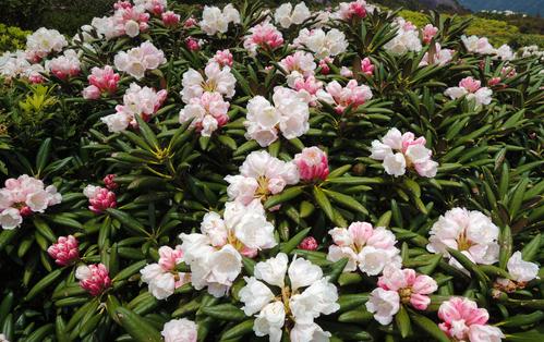 ひさしぶりの森、石楠花。_b0240382_21474746.jpg