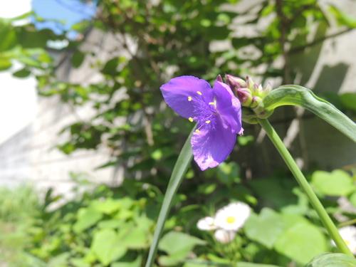 花の命は短くて・・・・_e0094102_1332317.jpg