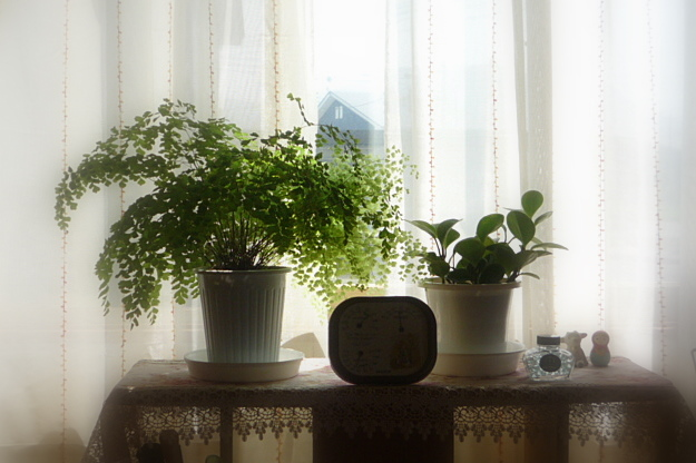 寄り添う草花~対照的な姿に気がついて_a0214206_21263451.jpg