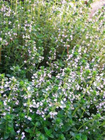 「紫陽花」の季節です。_a0125419_06064160.jpg