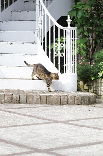 [猫的]TAKARAZUKA_02_e0090124_22131945.jpg