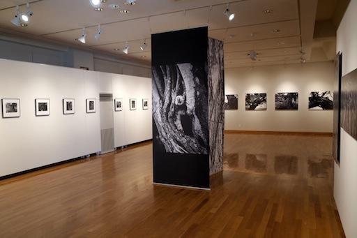 東川町文化ギャラリー展示情報_b0187229_14141363.jpg
