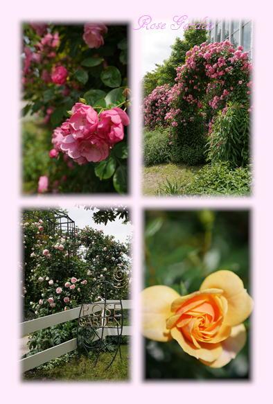 淡路奇跡の植物園_f0292335_15185131.jpg