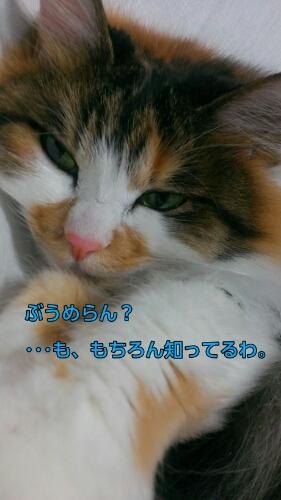 c0181639_1773773.jpg