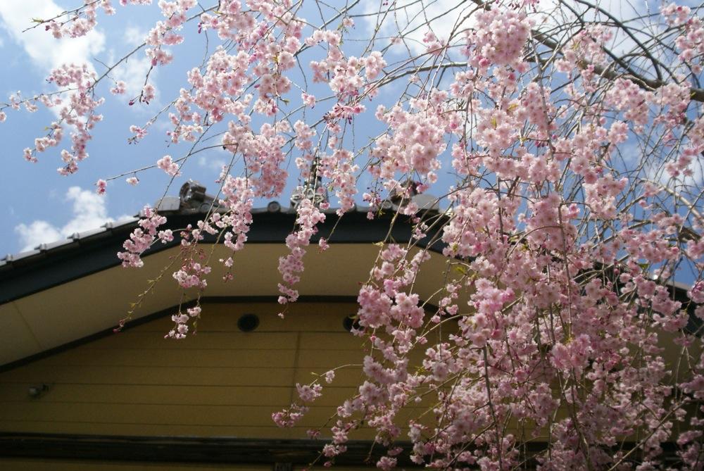 春も終わりね〜_d0001843_23282167.jpg