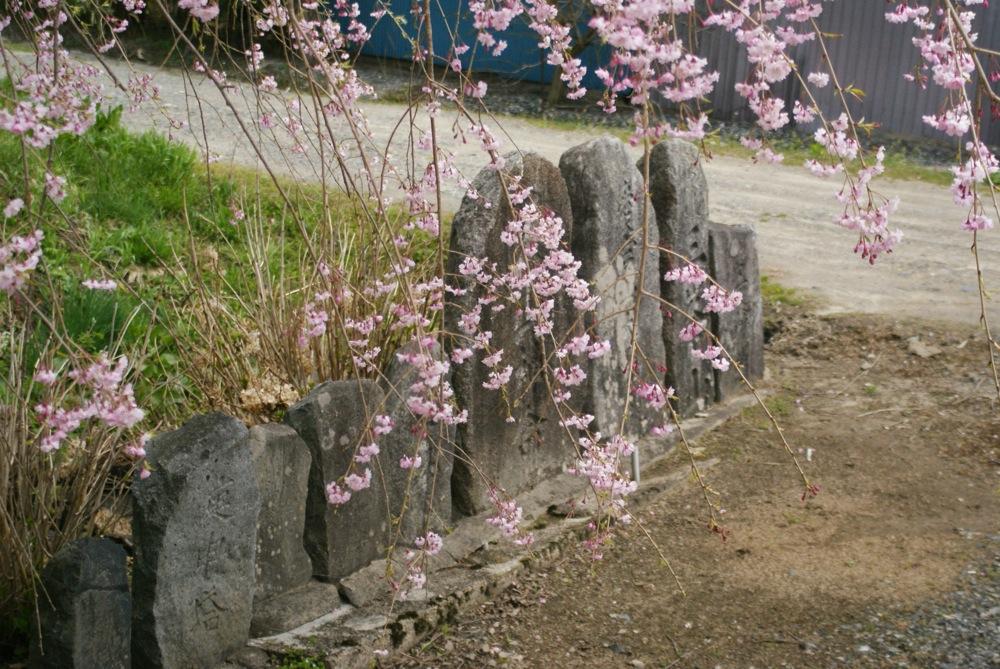 春も終わりね〜_d0001843_23323977.jpg