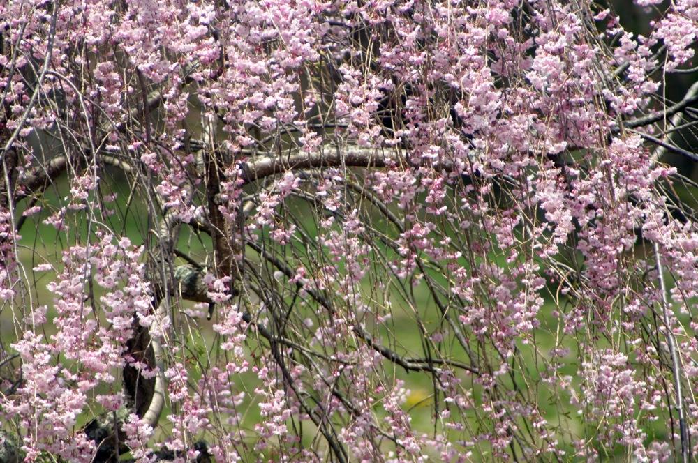 春も終わりね〜_d0001843_23325856.jpg