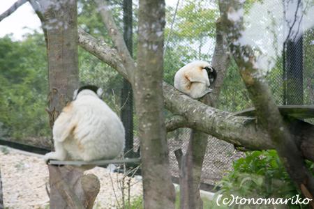 糸井さんの「パリの動物園とオレたちの歯」 パリ4日目_c0024345_1712146.jpg