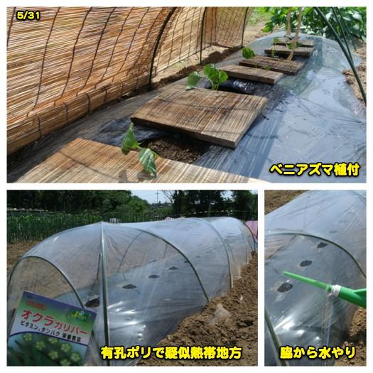 ウコちゃんの習性_c0063348_2154122.jpg