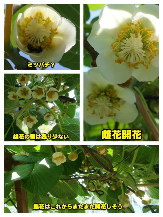 ウコちゃんの習性_c0063348_21541338.jpg