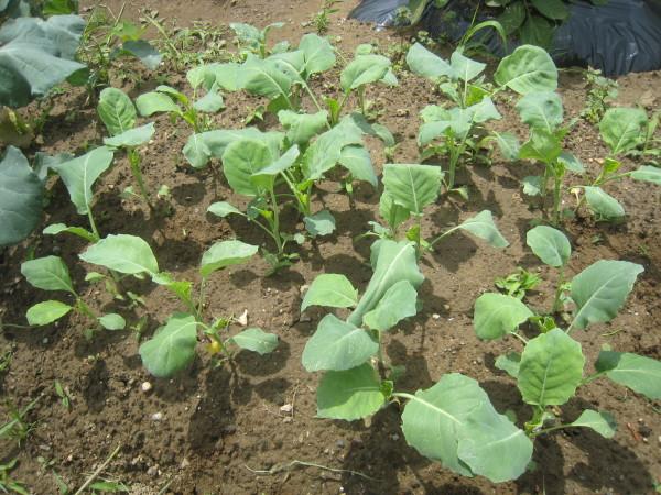 まだまだ定植 & 収穫物も増加中~_e0121558_22033996.jpg