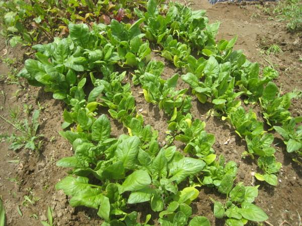 まだまだ定植 & 収穫物も増加中~_e0121558_22034785.jpg