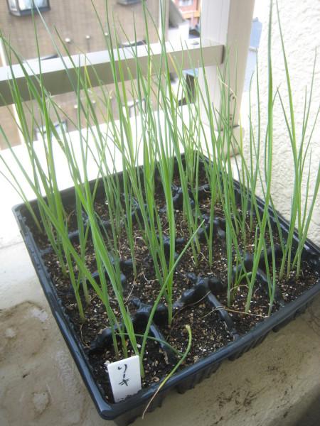 まだまだ定植 & 収穫物も増加中~_e0121558_22062900.jpg