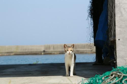 漁港での再会_b0153363_20372783.jpg