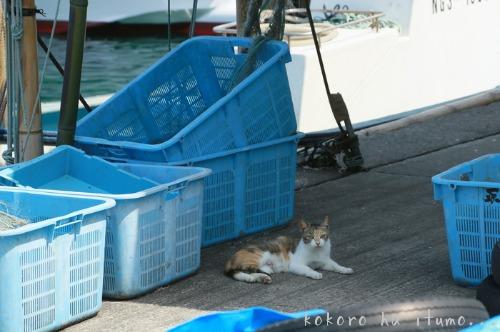 漁港での再会_b0153363_20432624.jpg